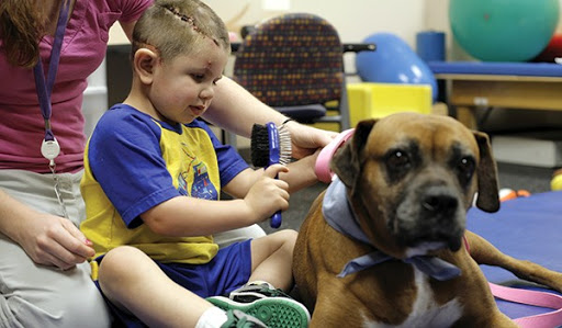 Animal-Assisted Therapy, Veterinary Social Work, & Social Work With People & Pets in Crisis