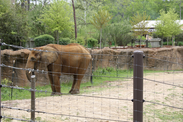 Zoo Snooze 2015 - IMG_7265.JPG