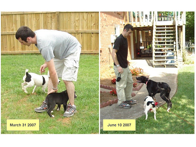 The Dynamite Danes Family! - Nye_Dogs_and_Master_Nye.jpg