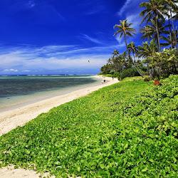 Waialae Beach Park's profile photo