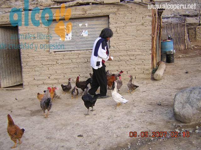 Asistencia Huancavelica por terremoto 2007 (18)