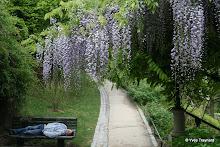 Parc de Belleville : l'endormi
