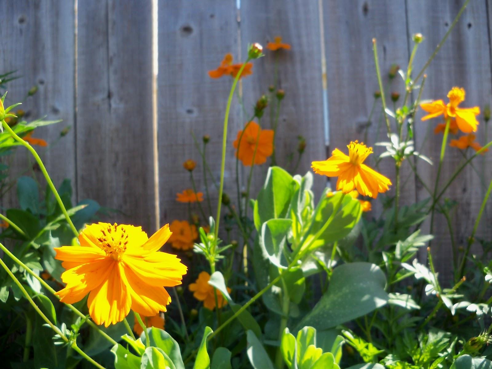 Gardening 2011 - 100_9141.JPG