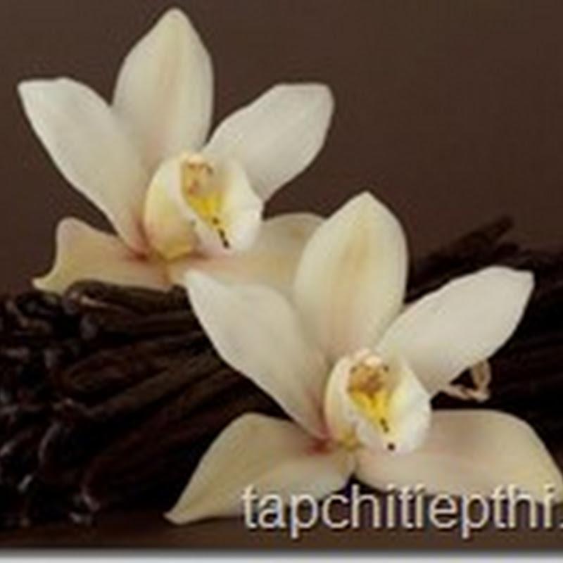 Đánh thức khứu giác của bạn với bột kem vanilla nguyên chất