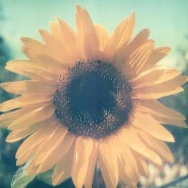 Daisy Amore