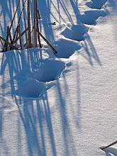 Photo: Coyote tracks, 1.9.10