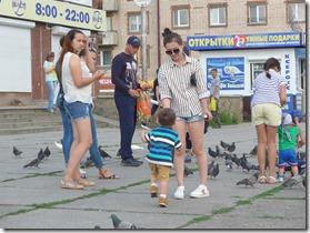les pigeons de severobaikalsk