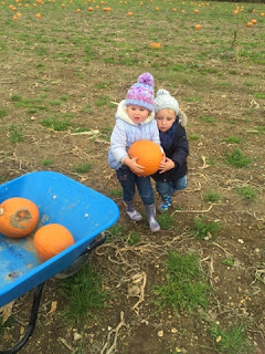 pumpking picking pickell farm southampon