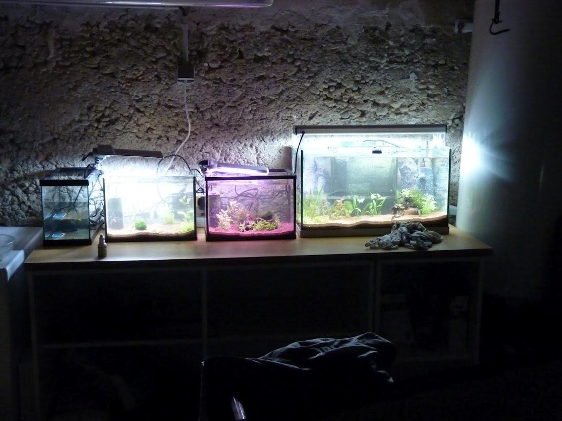Ma petit histoire Aquariophile de 2009 à aujourd'hui  P1030644
