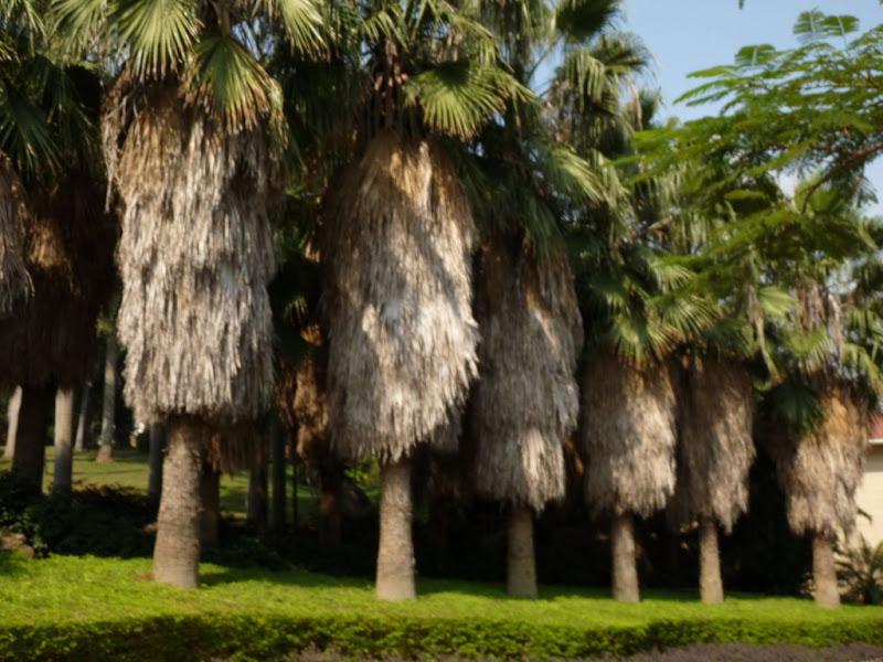 Xiamen, dans un autre parc