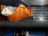 brande per piccoli animali fatte in casa