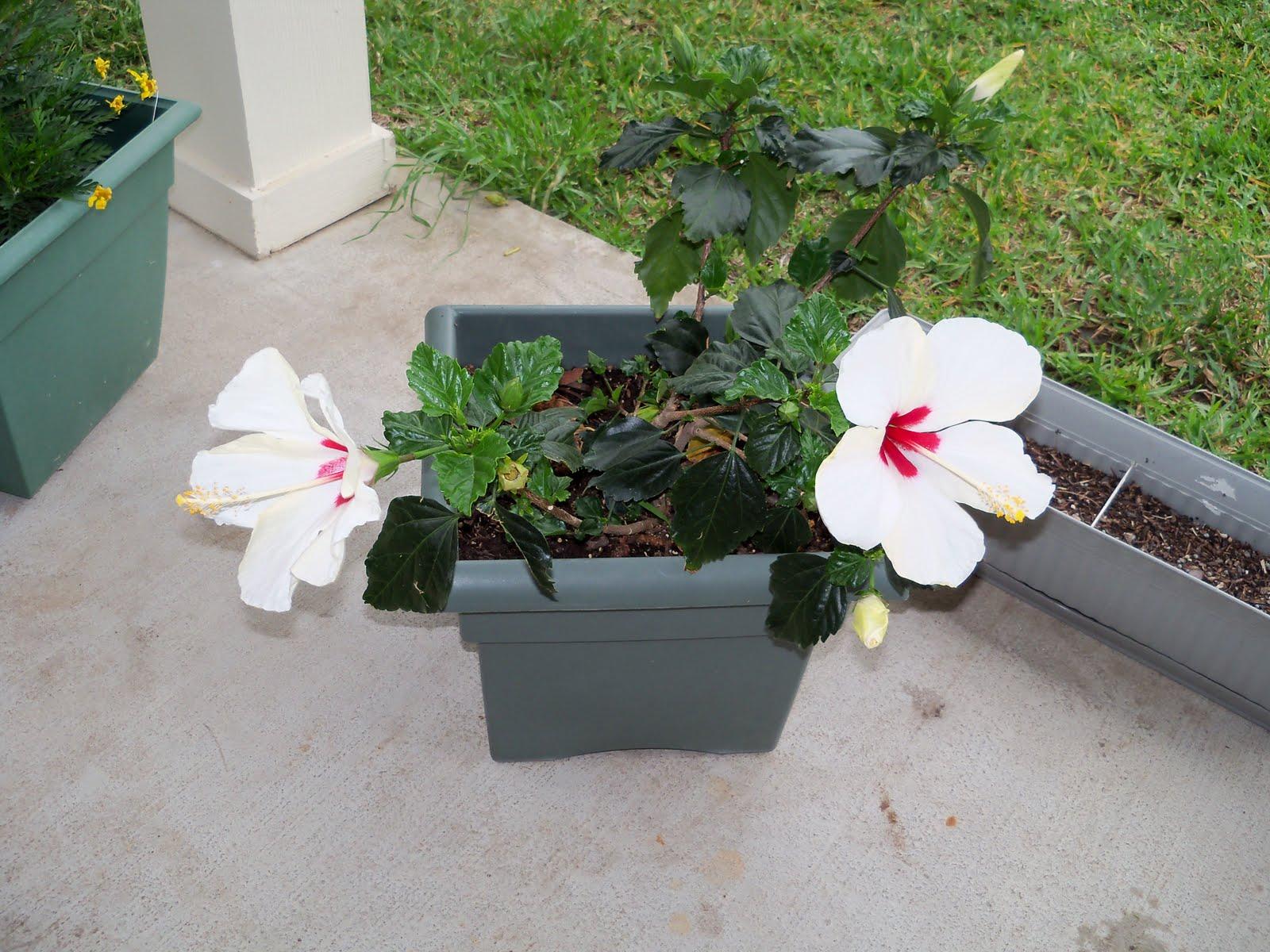 Gardening 2010 - 101_1553.JPG