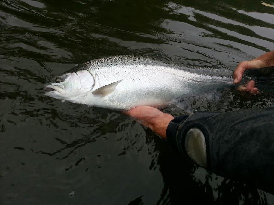 Fall Steelhead Fishing in Michigan