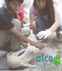 Campaña de asistencia en Mangomarca SJL (20)