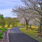 2011-04-10 Meadowlark Botanical Gardens
