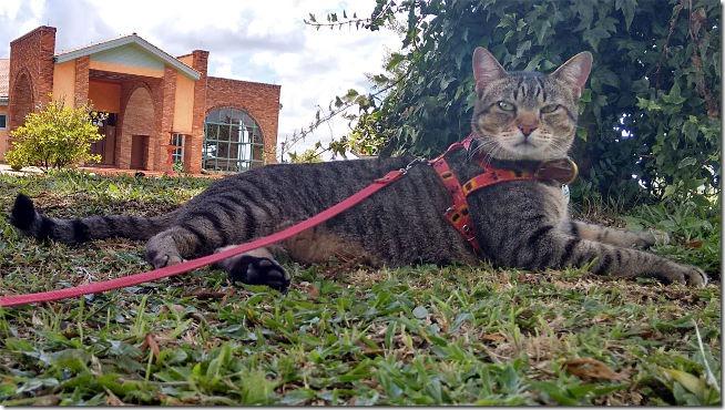 fredy-o-gato-viajante
