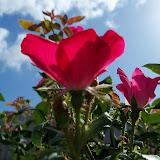 Gardening 2011 - 100_9995.JPG