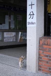 台湾旅行 平渓線 十分駅のねこ