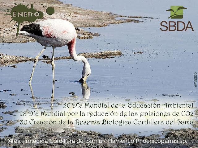 Calendario Ambiental Enero 2012