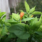 Gardening 2012 - IMG_2756.JPG