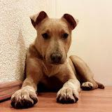 Bruno u novom domu - 17078574_1370926226311302_734205280_n.jpg
