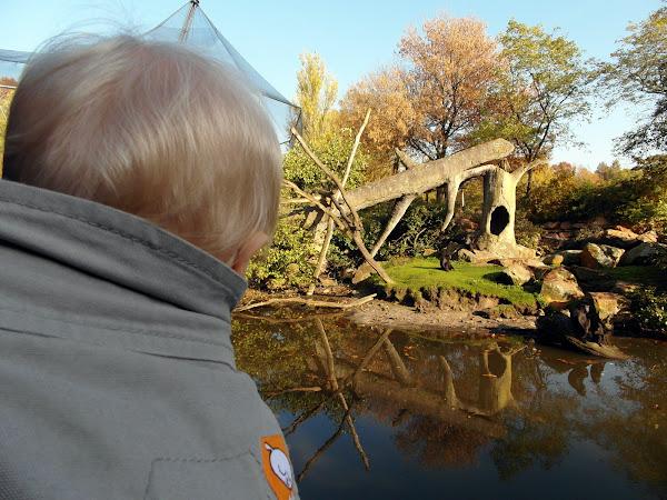 Eon ziet apen