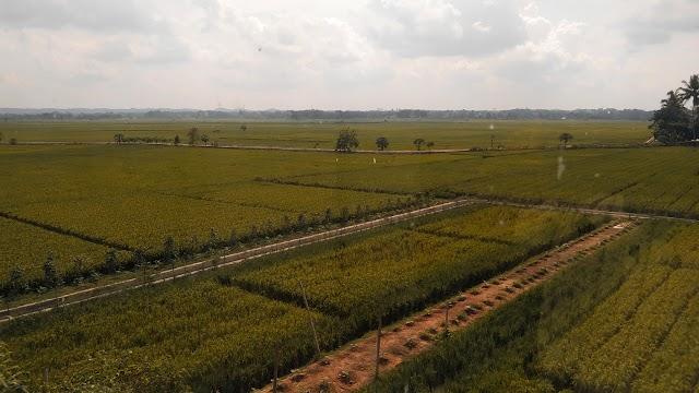 Pengelolaan Aset Daerah di Dinas Pertanian Pringsewu Diduga Tidak Jelas Pengelolaannya