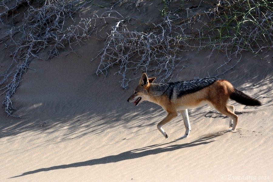 Namibia+2014_018.JPG