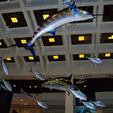 Houston Museum of Natural Science - 116_2646.JPG