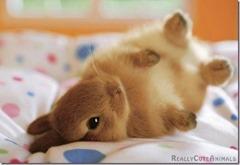 Cute-Rabbit-03