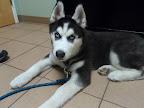 Denali-Hutchins-Atkinson-NH-veterinarian.jpg