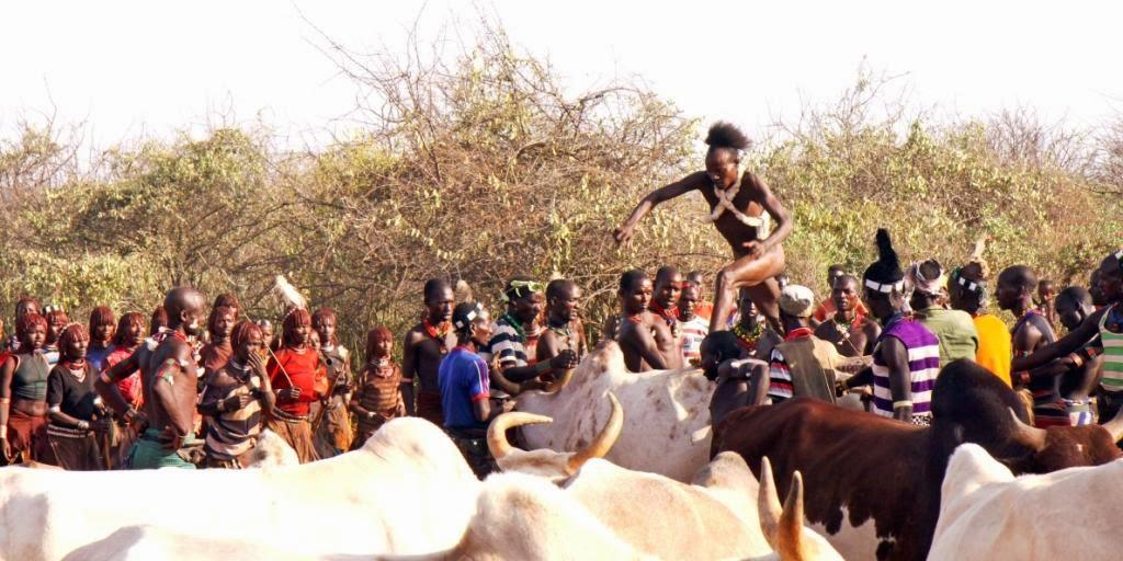 Bull Jumping.Vyru isventinimo ceremonija.Pietu Etiopija.