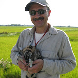 Osprey Banding - picture55.JPG
