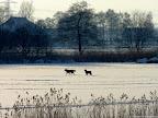 winter-2012-001.jpg