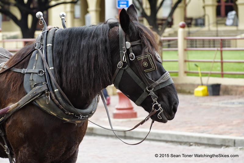 03-10-15 Fort Worth Stock Yards - _IMG0810.JPG