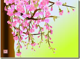 4月枝垂桜