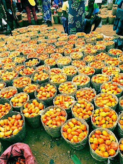 Prices of tomatoes in Benue markets in 2020