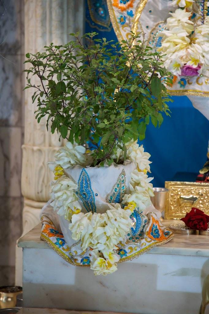 ISKCON New Govardhan Deity Darshan 08 Dec 2016 (35)