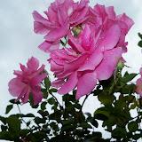 Gardening 2012 - 115_1347.JPG