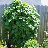 Gardening 2010, Part Three - 101_4410.JPG