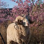 IMG_2082 Lesotho, Malealea, 2005.jpg