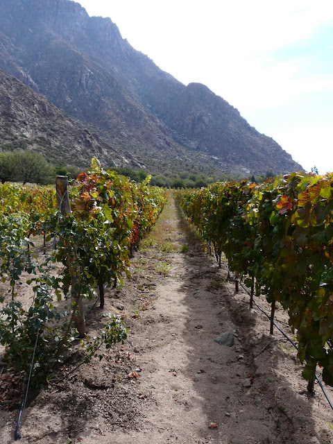 This is at a different winery (finca de las nubes)  Great scenery, mediocre wine.