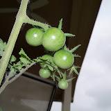 Gardening 2011 - 100_7211.JPG