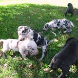 Graysee's babies @ 4 weeks