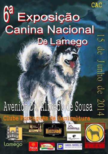 Exposição em Lamego volta a eleger cães campeões de beleza