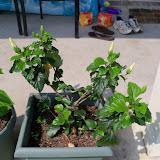 Gardening 2010, Part Two - 101_3458.JPG