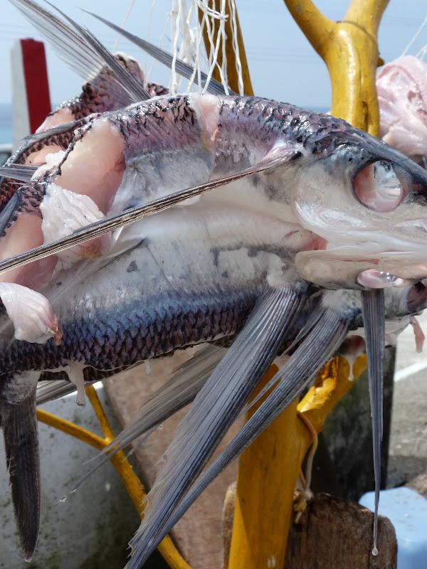 Lanyu est reputee pour ses poissons voalnts