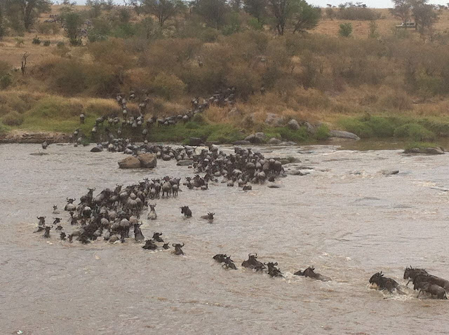 Serengeti National Park Mara River Crossing