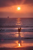 """Surfer Sunset"" by Witta Priester - General"