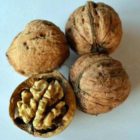 Аполло грецкий орех